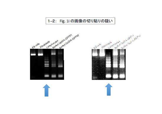 「研究不正があった」 理研、STAP細胞論文の最終報告書を Web 公開