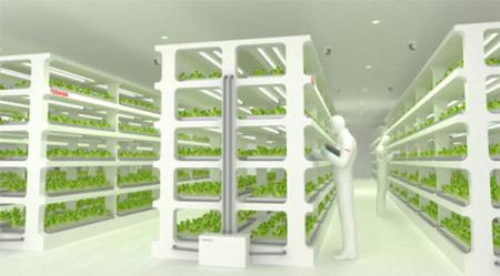 東芝、野菜づくりを始める--「クリーンルーム」備えた工場で生産