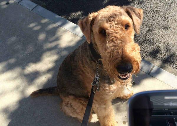 「犬が振り向く音」が出るカメラアプリで、愛犬のベストショットを撮ろう!