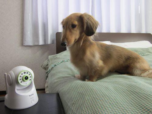 お留守番のペットも安心--NEC、スマホで留守宅を確認できるセンサー付きネットワークカメラ発売