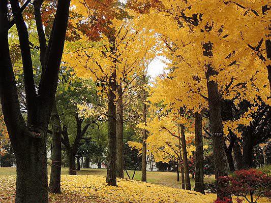 台風は平年並かやや多め--秋の天気傾向をウェザーニューズが発表