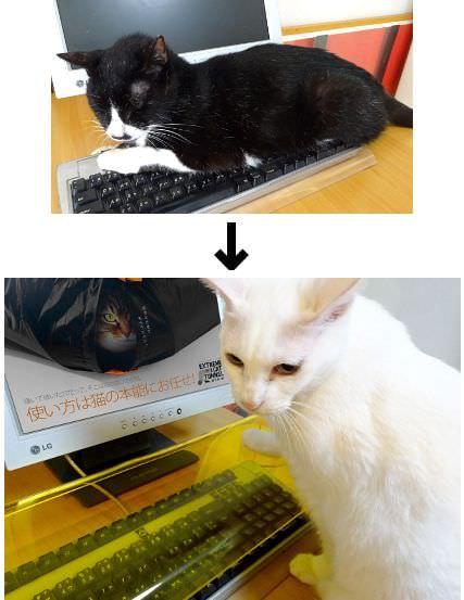 猫からキーボードを守る透明アクリル製カバーはいかが?