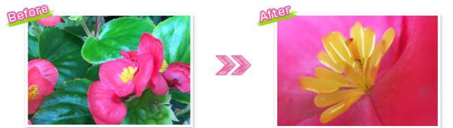 通常の撮影(画像左) マクロレンズを使用した撮影(画像右)