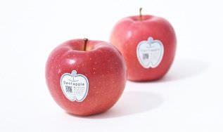かじって虫歯を発見できる「デンタプル」りんご!―「松本りんご協会」と歯科医師が開 発