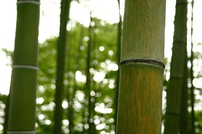 竹は「見て良し、使って良し」の植物なんですね