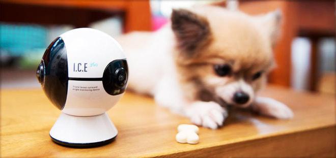 ウチの子どこ?―ペットが部屋のどこにいても360°見まもるカメラ