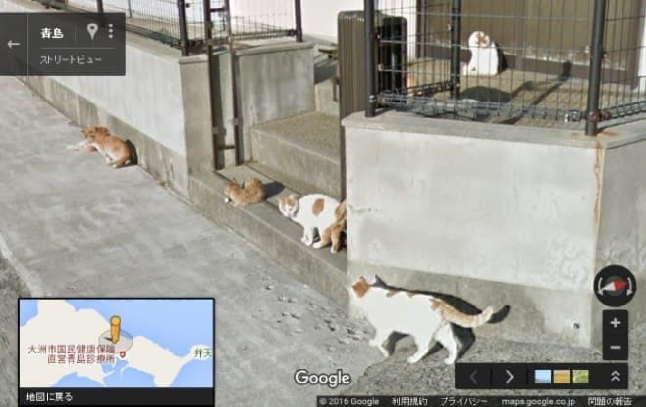 猫のことになると、がんばりすぎでは