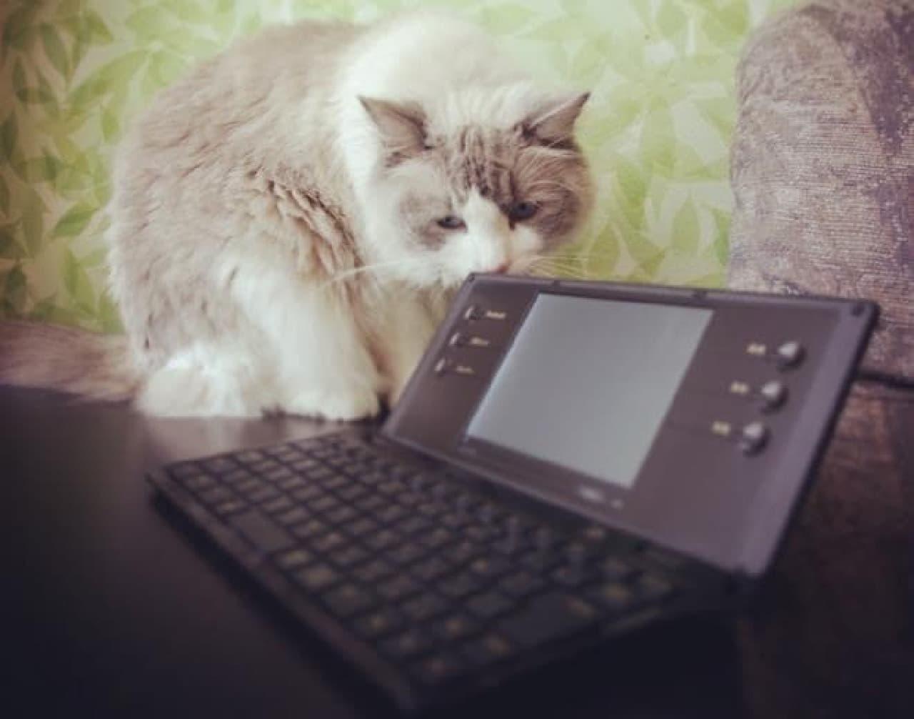 キングジムはポメラと猫で宣伝(出典:同社公式Twitterアカウント)