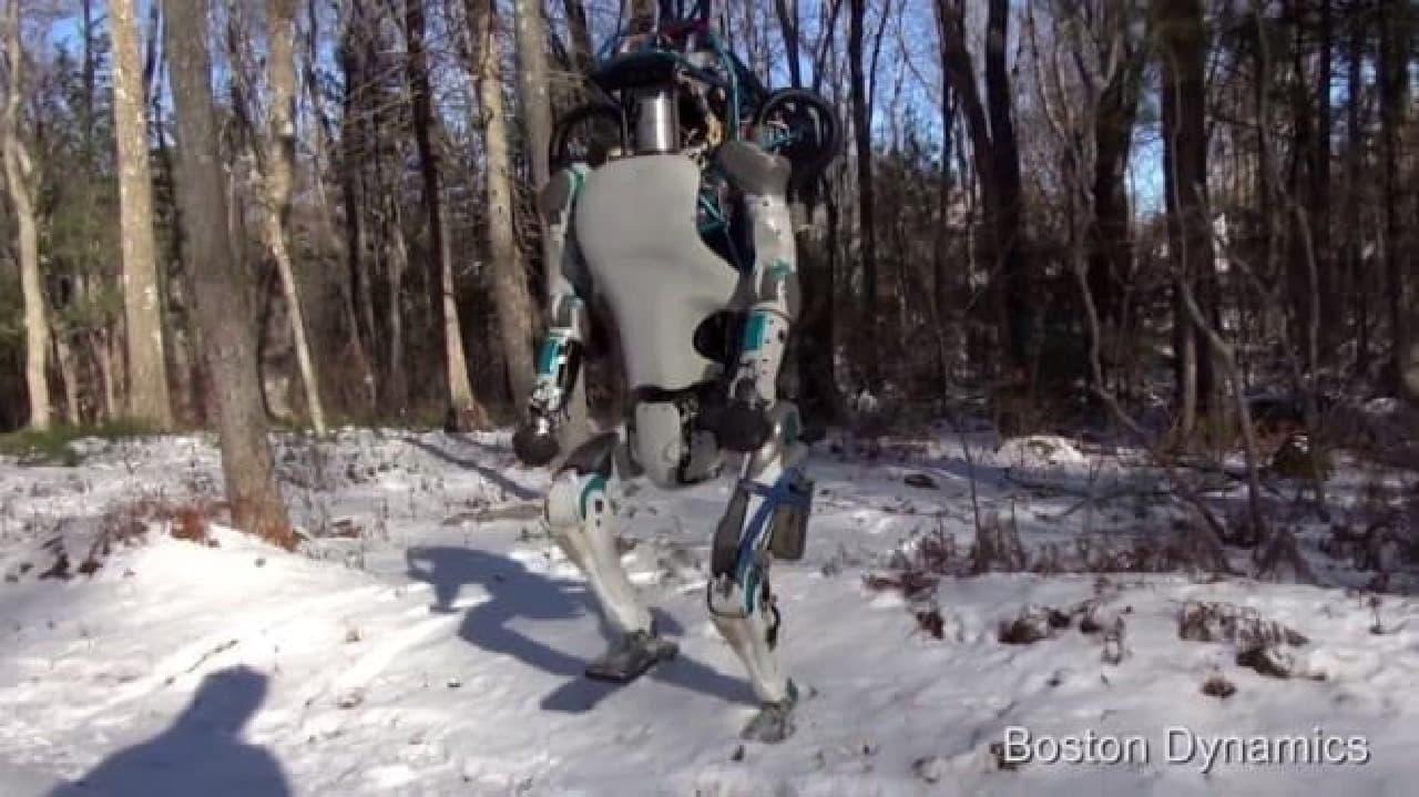 雪の上でも平気で歩く