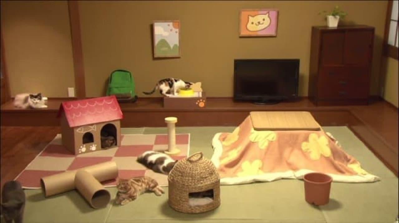 猫が遊んでいる映像をずっと中継するだけの「リアルねこあつめ」もあった