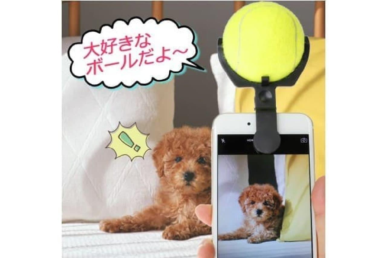犬の気を引くボール付きスタンドを装着したiPhone