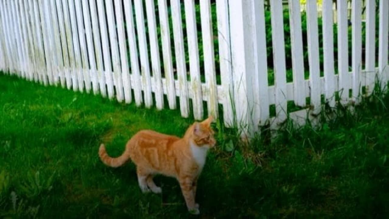 人工知能が、庭でフンをするネコを追い払う