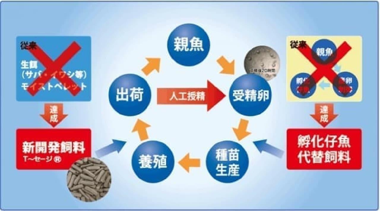 完全養殖サイクルのイメージ図