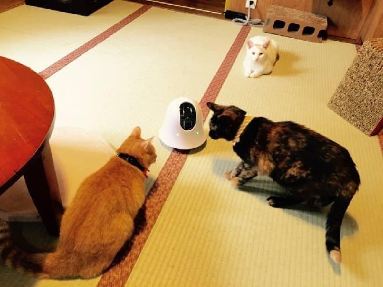 ネコ3匹とロボット