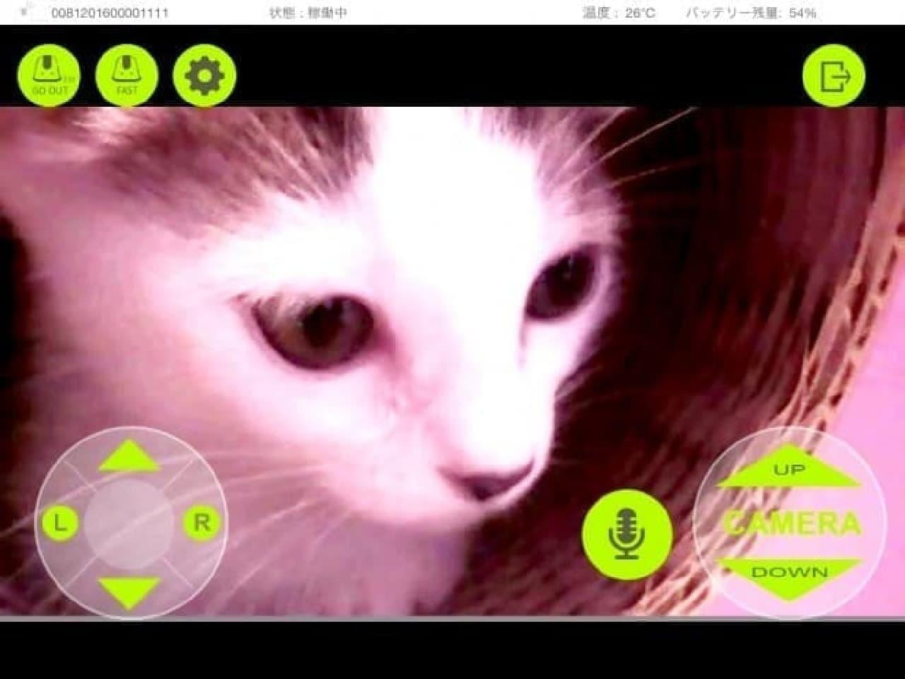 ネコの顔を接写しているところ