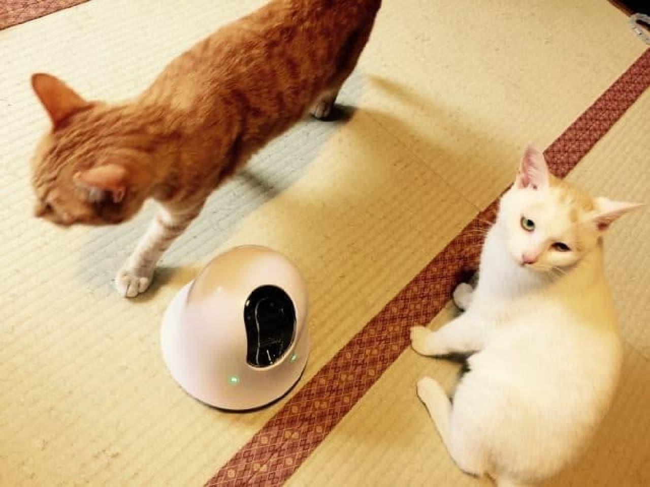ilboとネコ2匹のようす