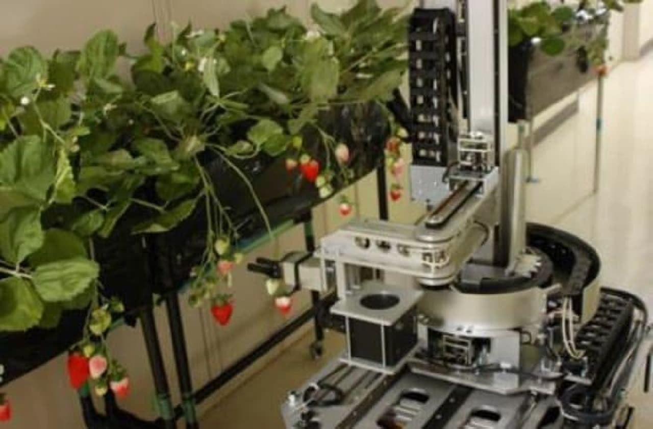 自走式イチゴ収穫ロボット