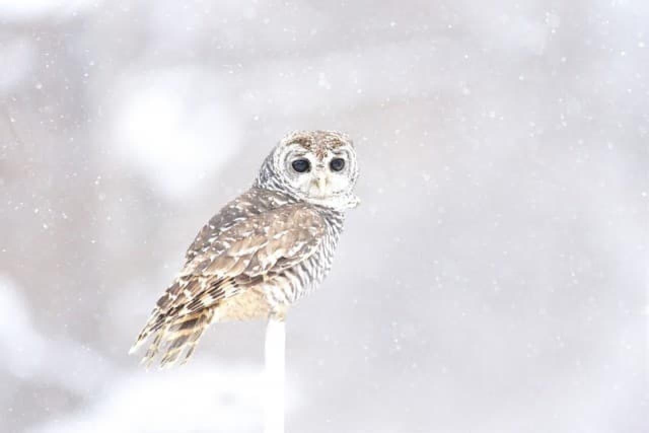 ウェザーニューズ、降雪傾向2016