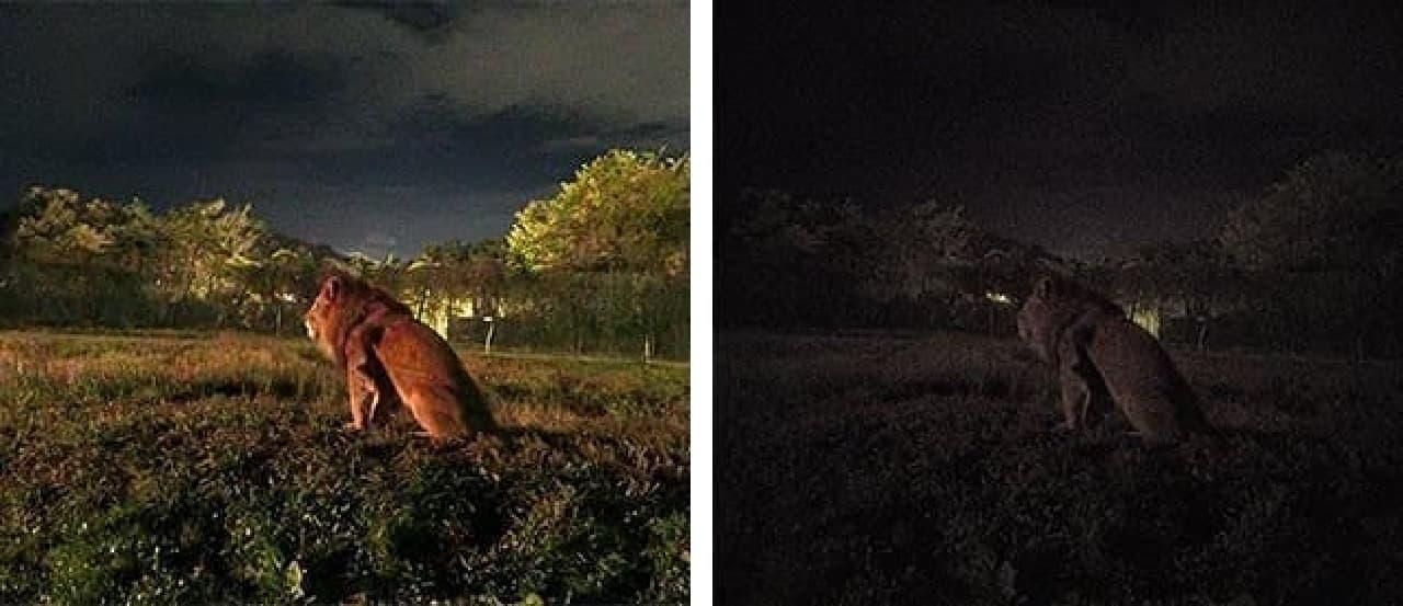 撮影映像の鮮明さの比較