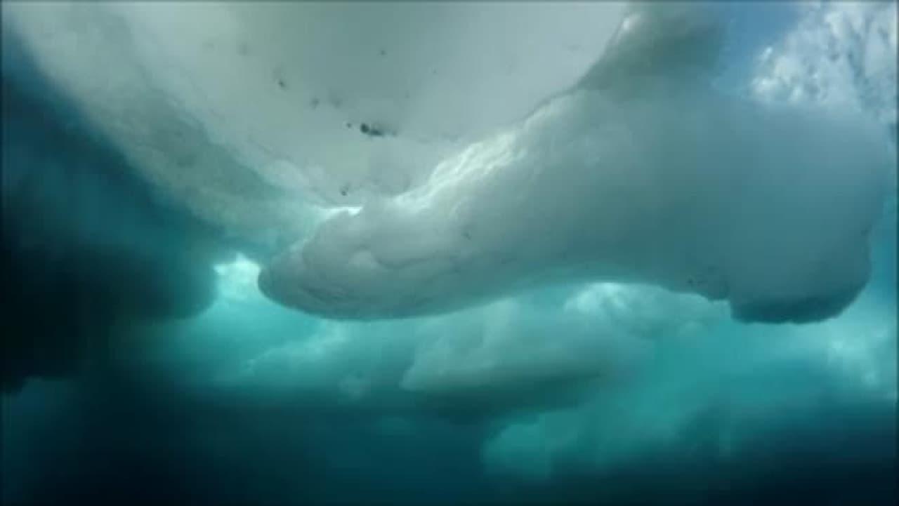 北極海の氷の下の光景
