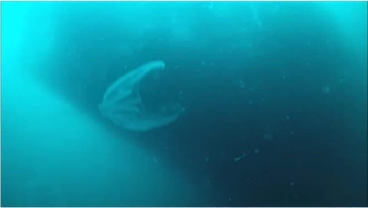 海氷の下の光景その4