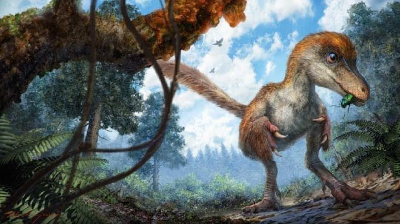 コエルロサウルス類のイメージ