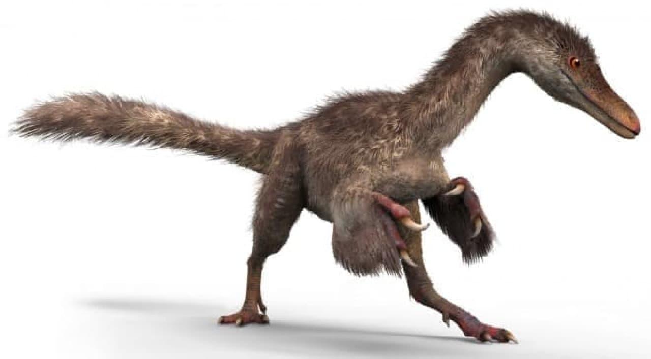小さなコエルロサウルス類