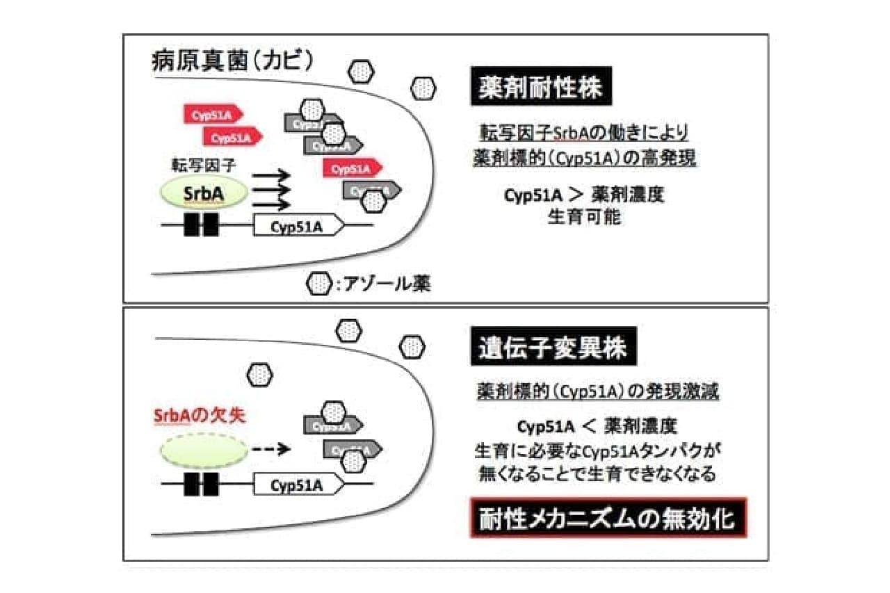 千葉大学による説明画像