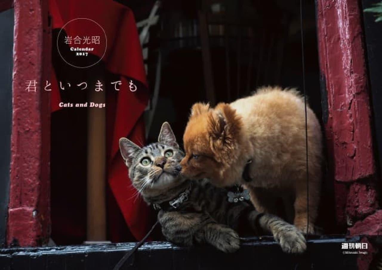 岩合光昭さん撮影の「犬&猫カレンダー」