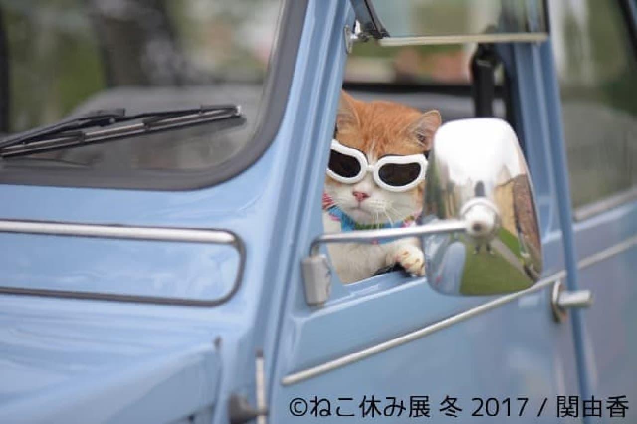 「ねこ休み展 冬 2017」(本祭)が1月27日スタート