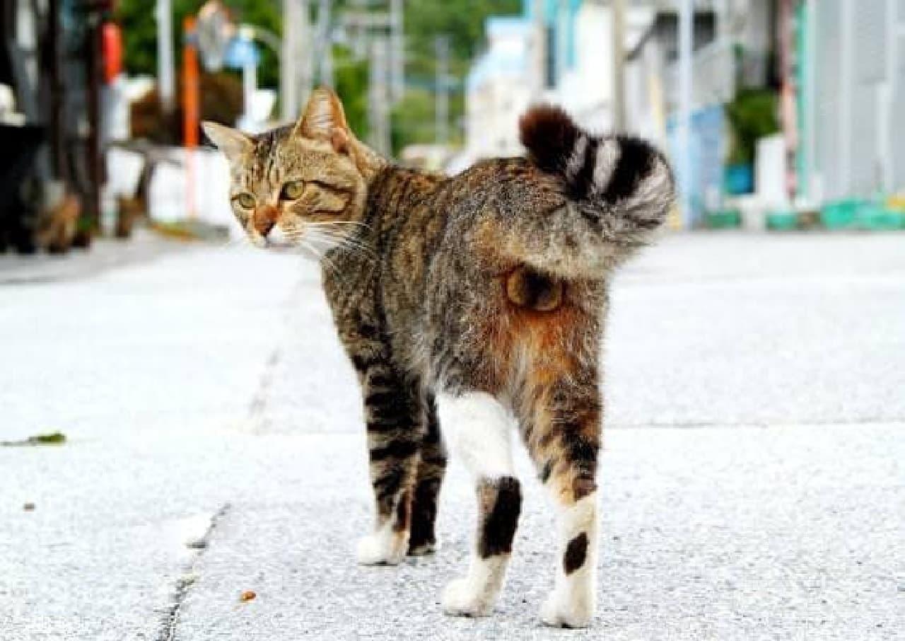 ネコのフェチショットを集めた写真展「ねこのまるまる展」