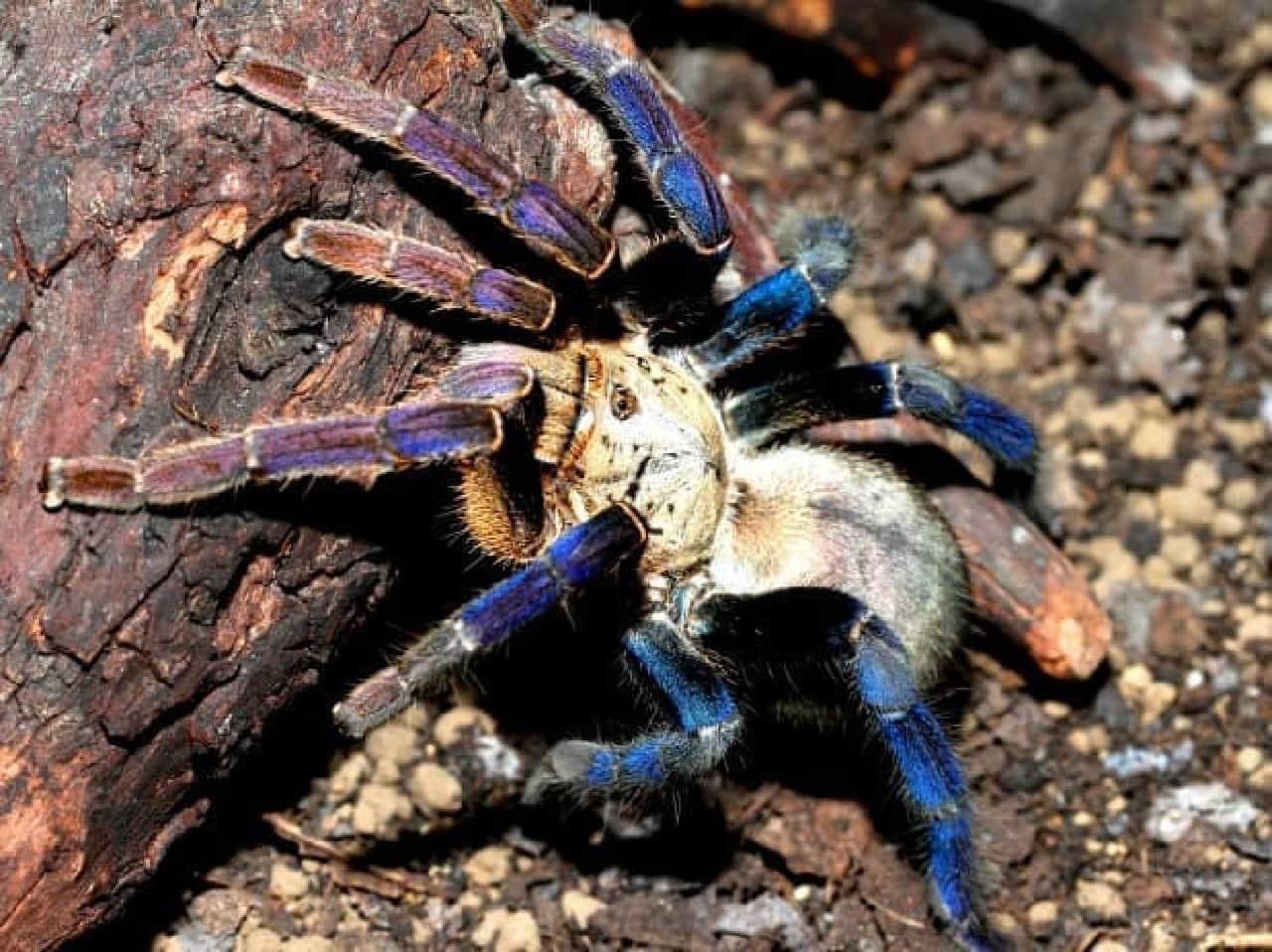 毒々しいクモの写真