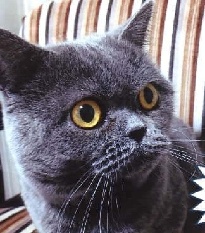 「猫ノ図書館」、2月22日オープン!…初代館長に「むぎ」さんが就任!