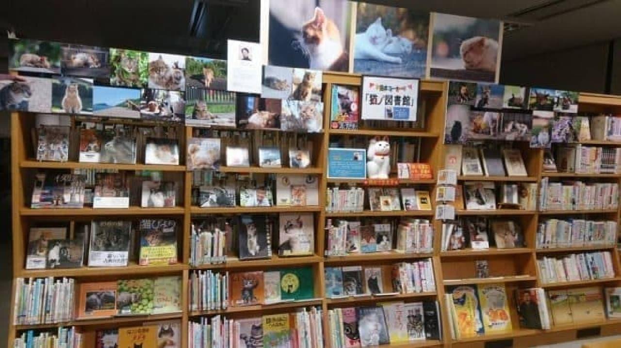 「猫ノ図書館」、2月22日オープン!…初代ネコ館長に「むぎ」さんが就任!