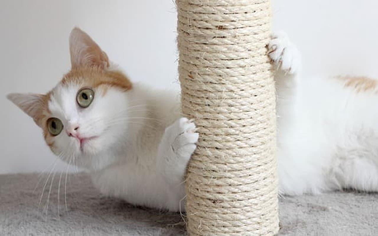 好きなネコのパーツ、3位は毛並み、2位は肉球、1位は?