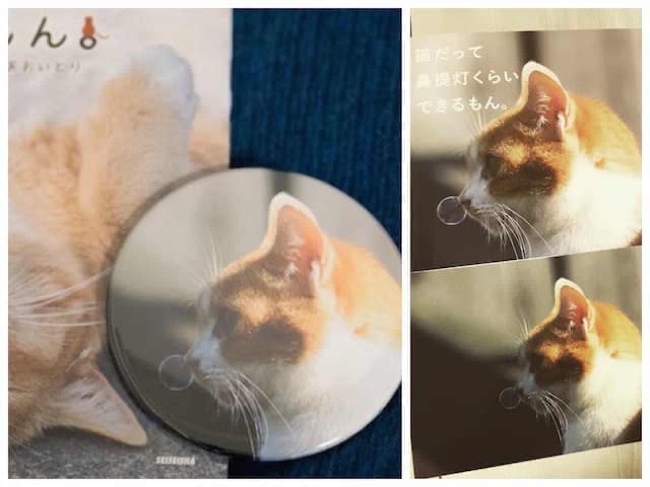 あおいとりさんによる写真展「にゃんぽとれ ~猫たちのポートレート~」