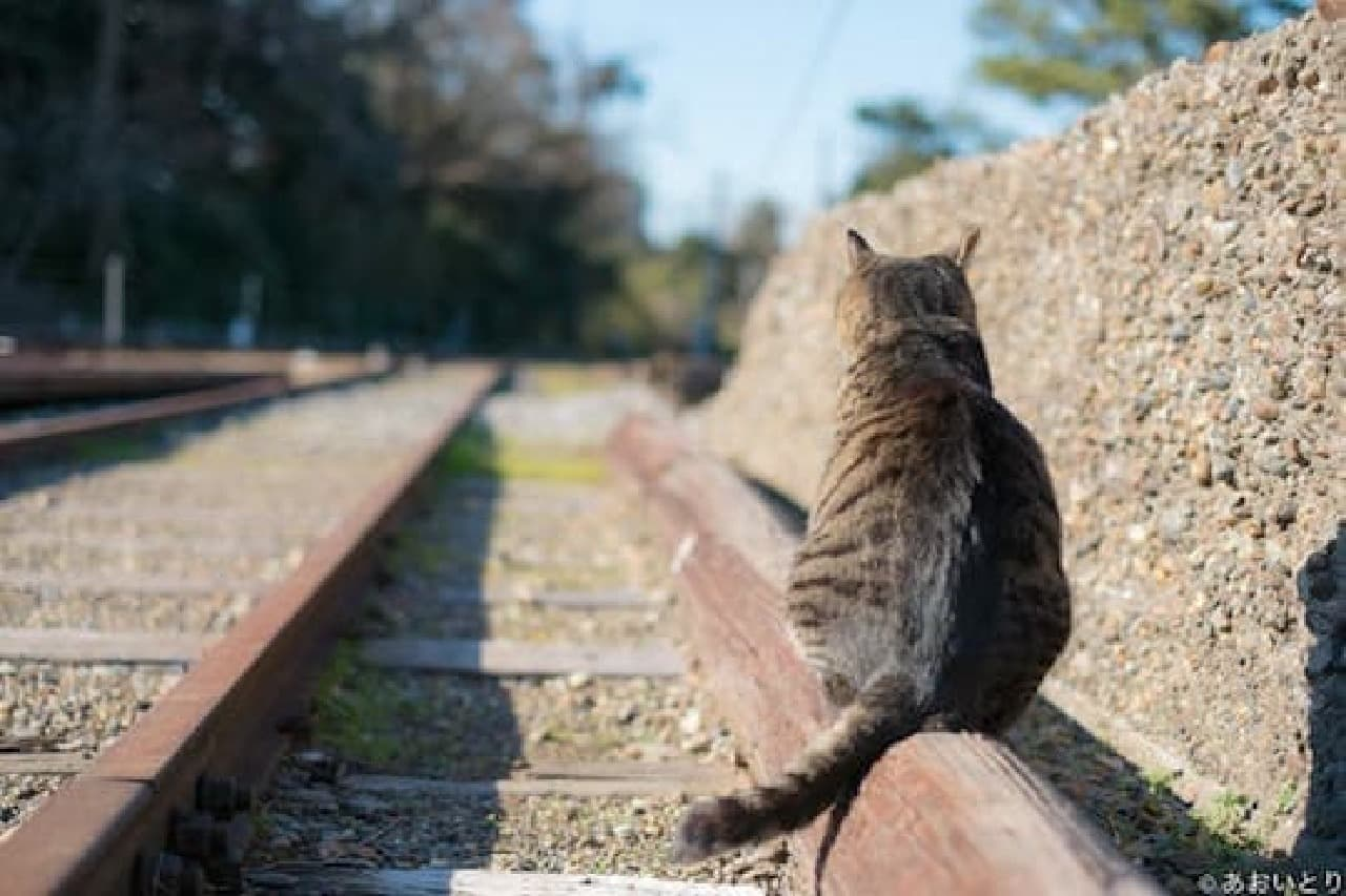 あおいとりさんによる写真展「にゃんぽとれ ~猫たちのポートレート~」、3月30日スタート