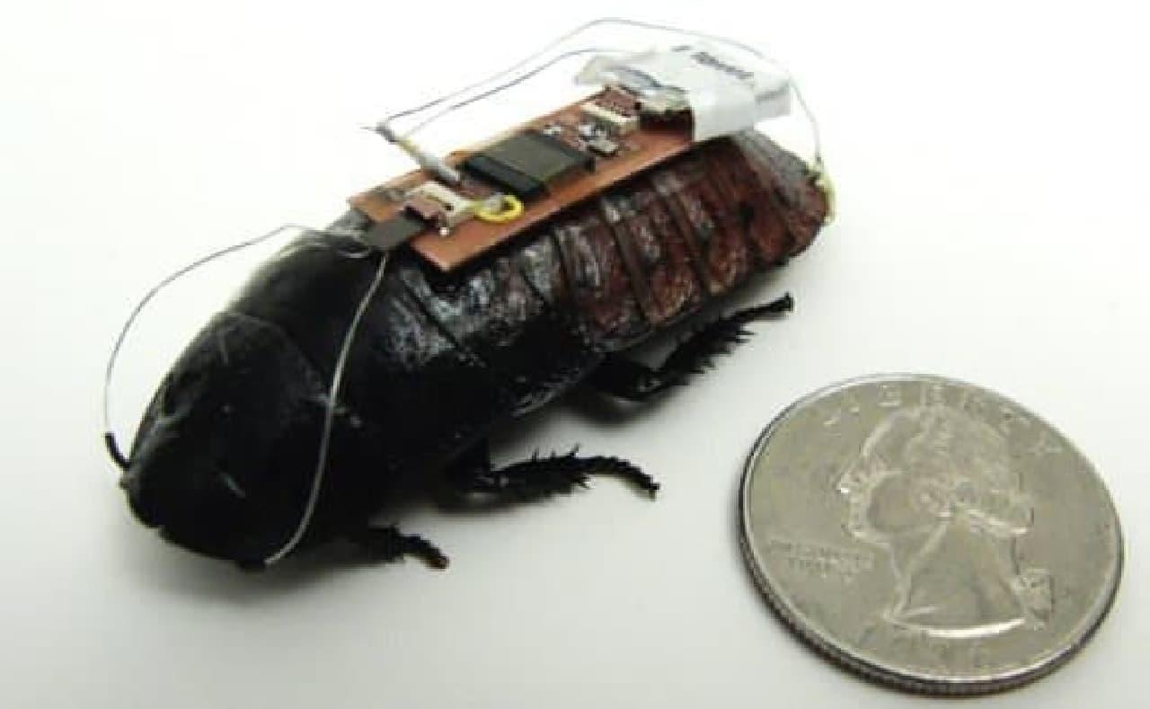 ゴキブリを「操縦」できる技術が進歩していた