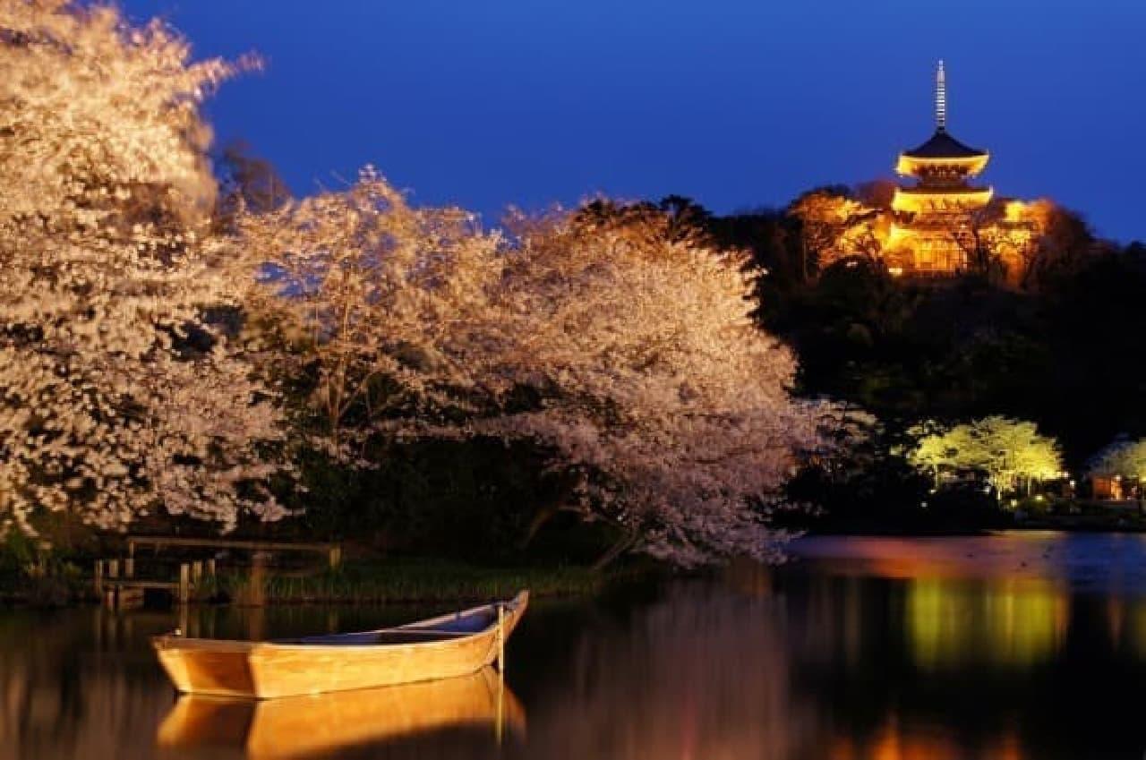 サクラの夜景と和舟