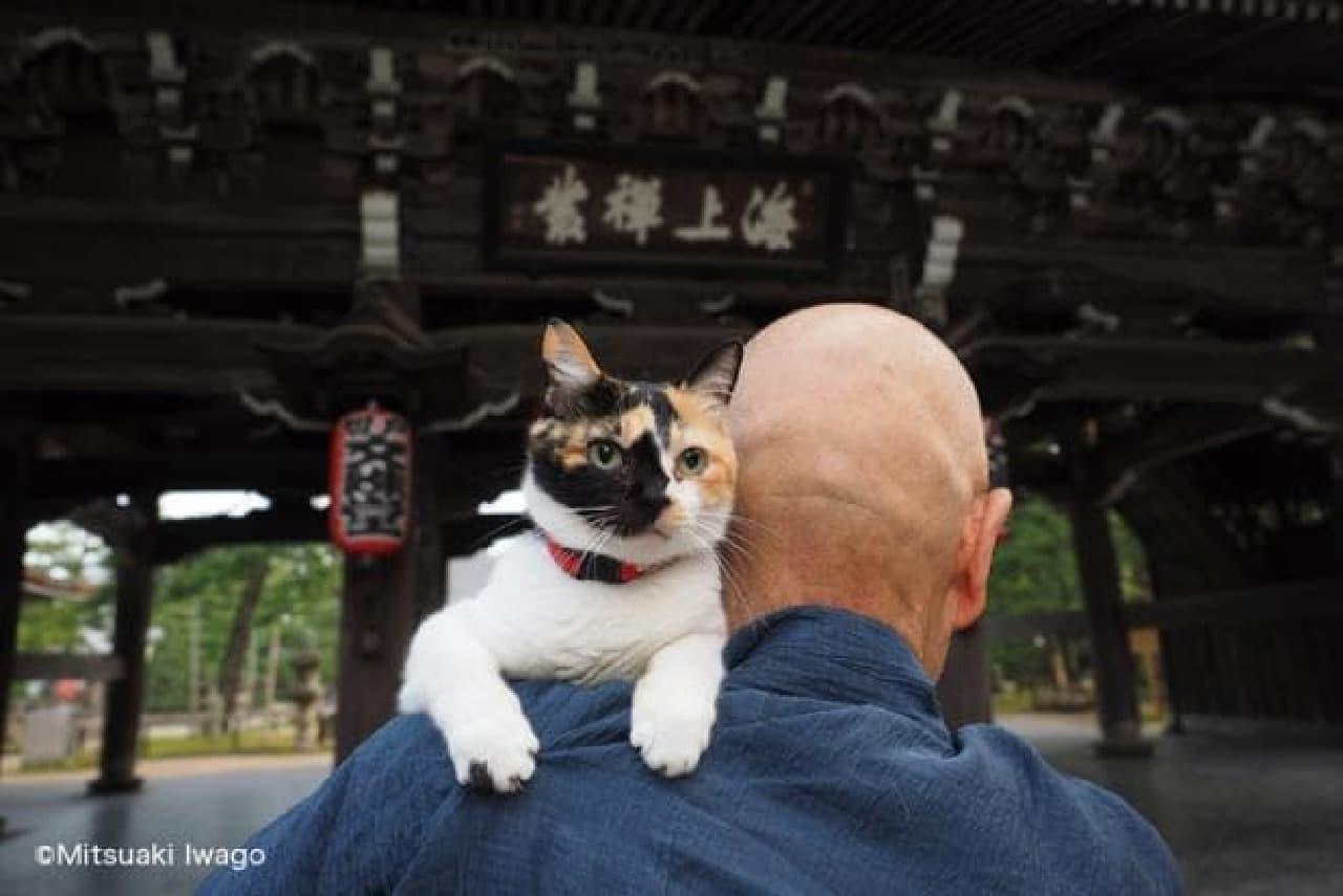 岩合光昭の新作写真展「ねこの京都」