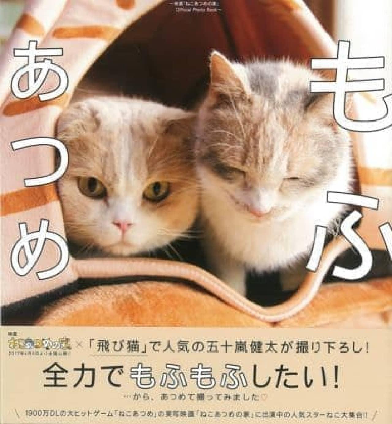 ネコ写真家 五十嵐健太さんの 「春の飛び猫写真展 全国巡回」スタート