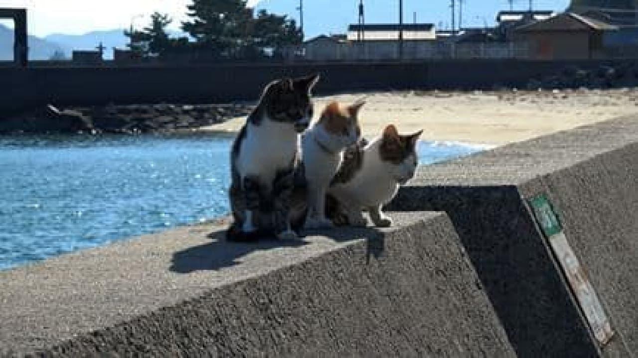 「瀬戸にゃん海」、4月放送開始