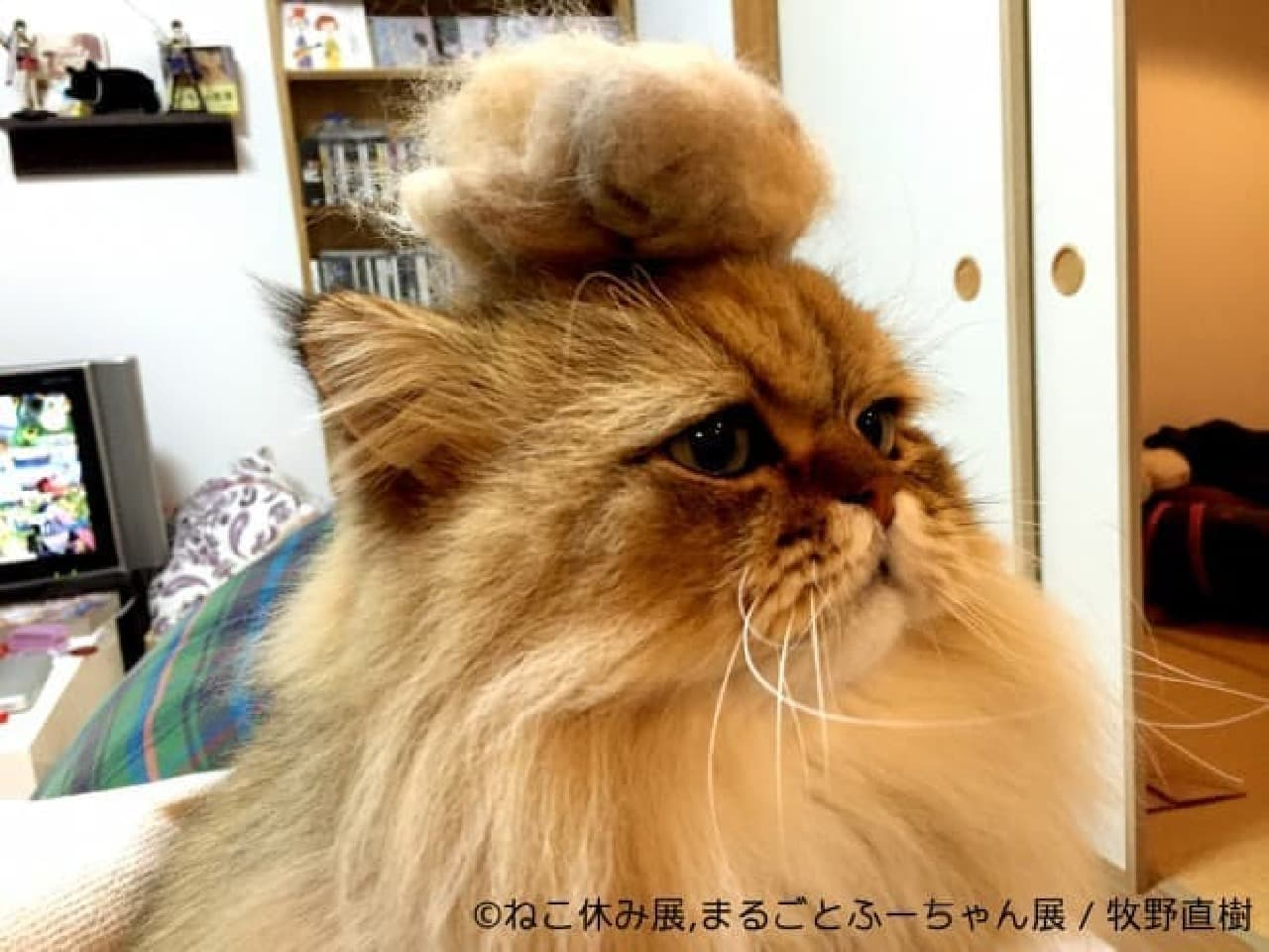 スター猫たちをフィーチャーした「ねこ休み展」巡回展&スピンオフ企画開催