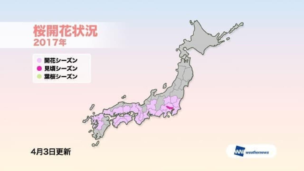 関東南部の花見は、明日(4月5日)がおススメ…ウェザーニューズが「第六回桜開花予想」を発表