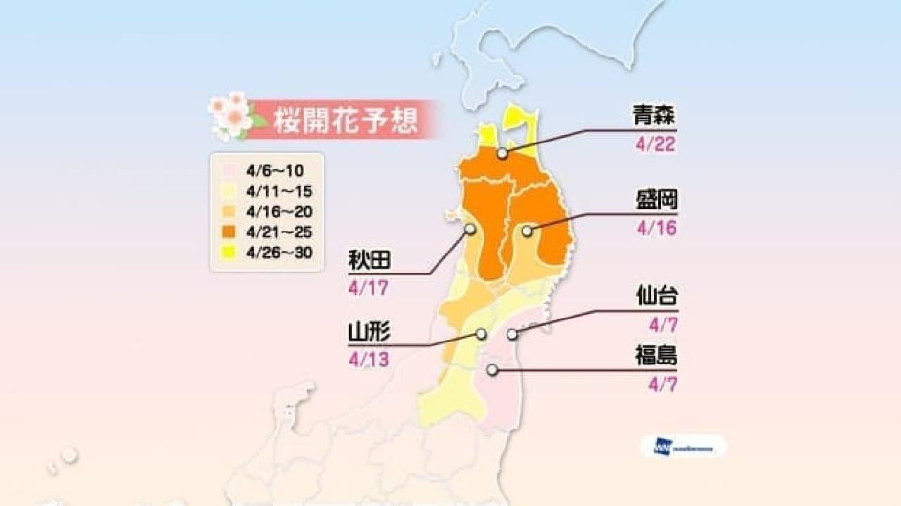 ウェザーニューズが「第六回桜開花予想」を発表