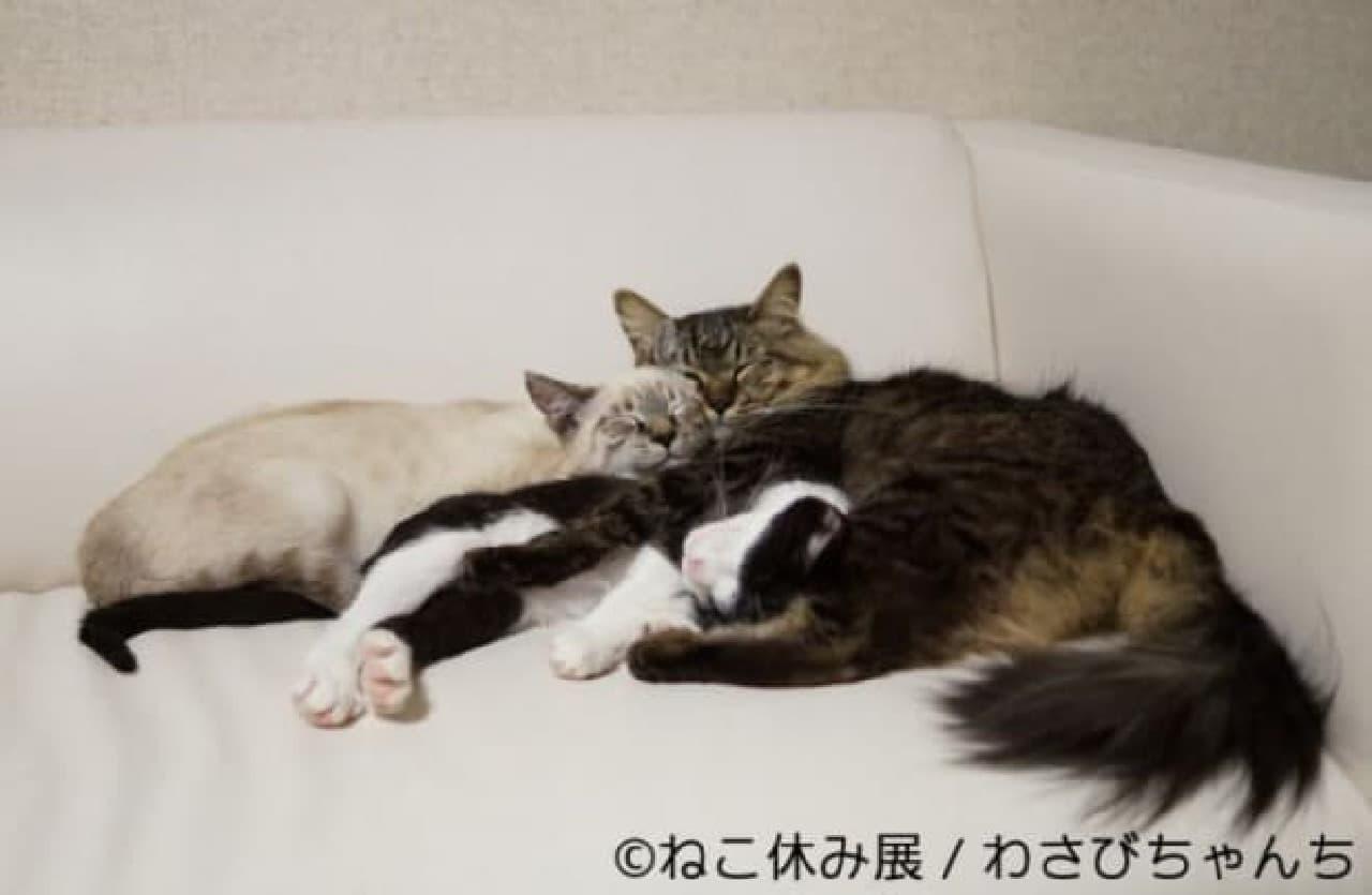 スター猫をフィーチャーした「ねこ休み展」巡回展&スピンオフ企画開催