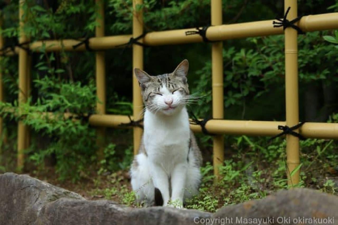 「Oha!4 NEWS LIVE」の新コーナー「おはにゃん」に沖昌之さん登場