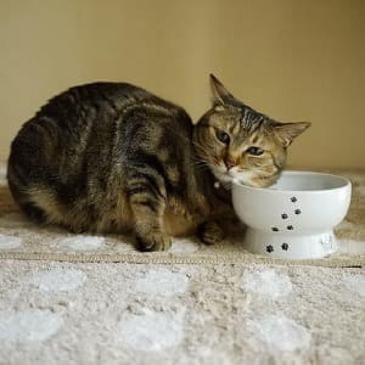 ネコが水を嚥下しやすいようデザインされた、ネコ用のウォーターボウル