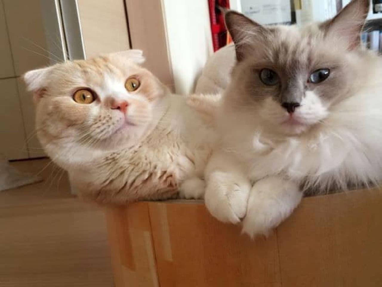 """""""ネコノミクス""""って、本当なの?…猫壱がネコビジネスを成功させた3つの秘密"""