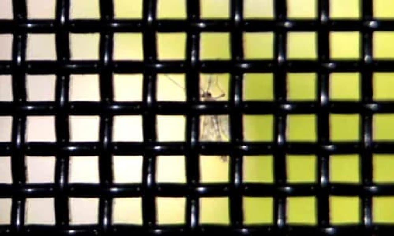 蚊を防ぐメッシュ構造